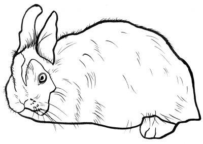 rabbit181