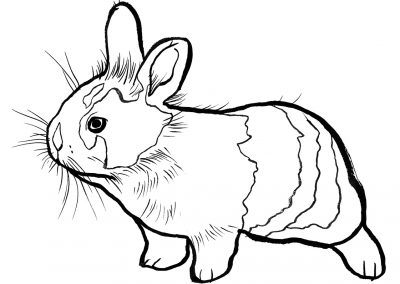 rabbit182