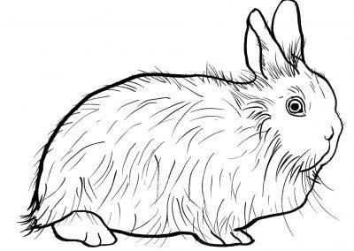 rabbit183