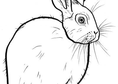 rabbit184