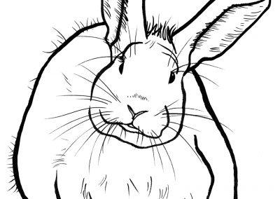 rabbit185