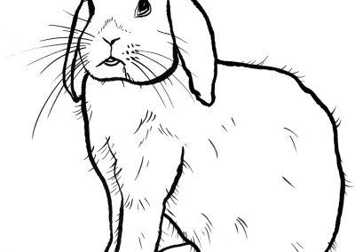 rabbit186