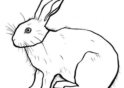 rabbit187