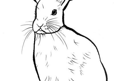 rabbit188