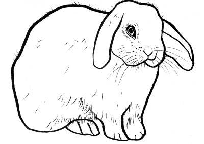 rabbit189