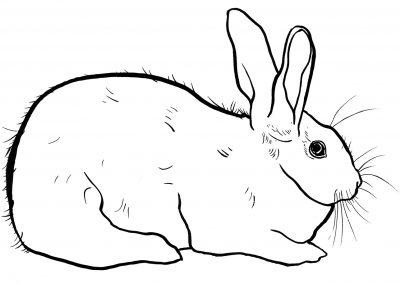 rabbit190