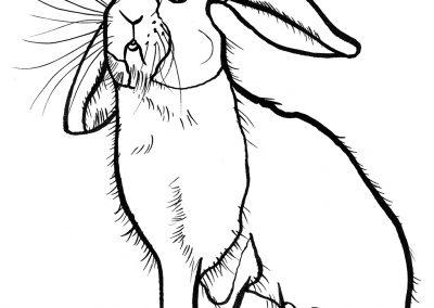 rabbit191