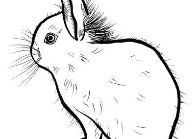 rabbit192
