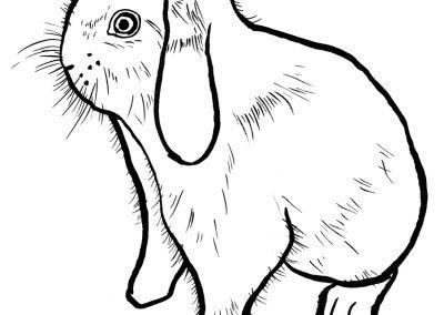 rabbit193
