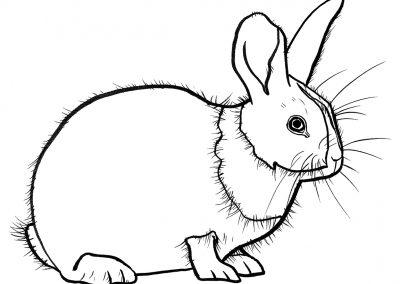 rabbit194