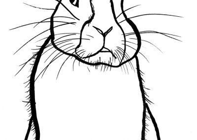 rabbit195