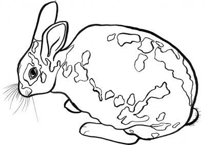 rabbit196