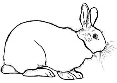 rabbit197