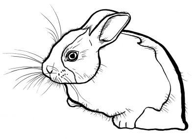 rabbit198