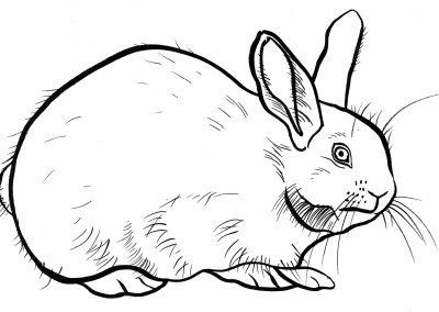 rabbit201
