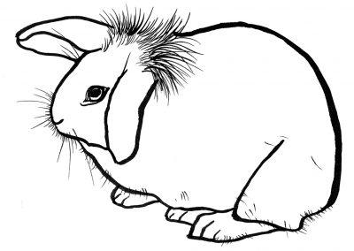 rabbit202