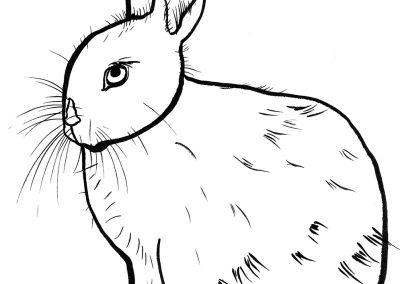 rabbit203