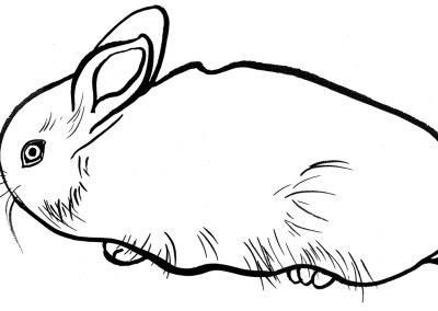 rabbit204