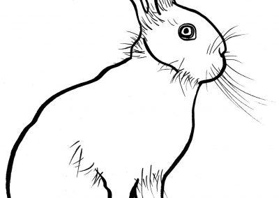 rabbit205