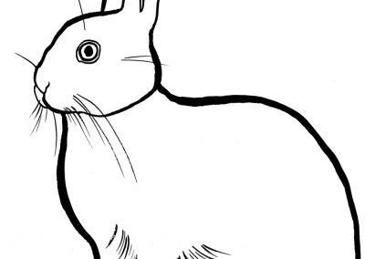 rabbit207