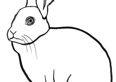 rabbit208