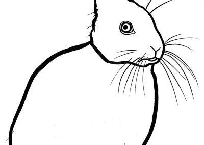 rabbit209