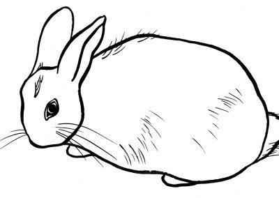 rabbit211