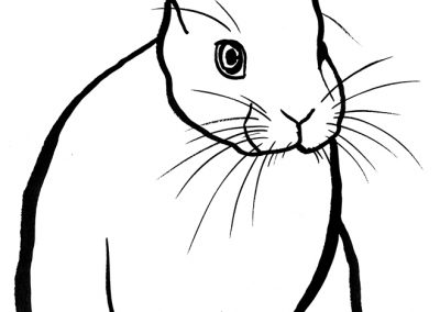 rabbit212