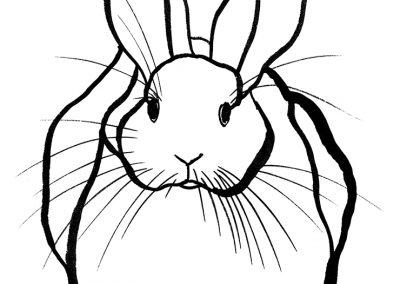 rabbit213