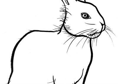 rabbit214