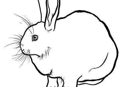 rabbit215