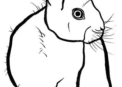 rabbit216