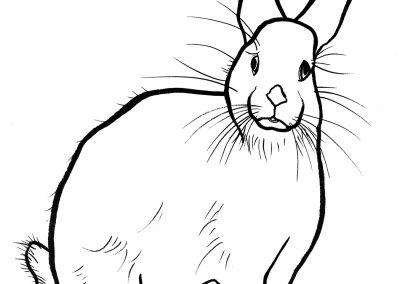 rabbit217