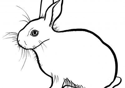 rabbit218
