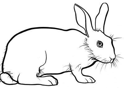rabbit219