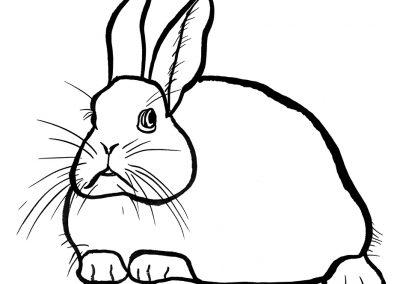 rabbit220