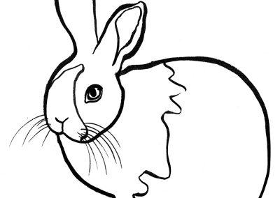 rabbit221