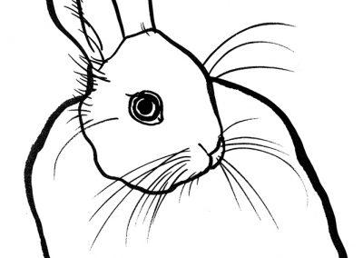 rabbit222