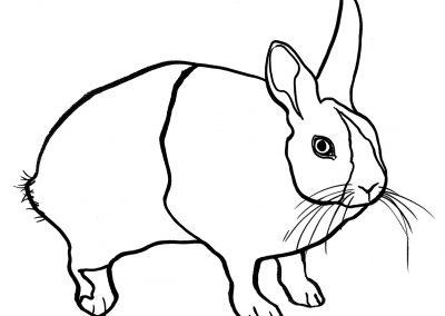rabbit223