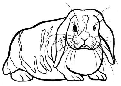 rabbit224