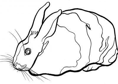 rabbit225