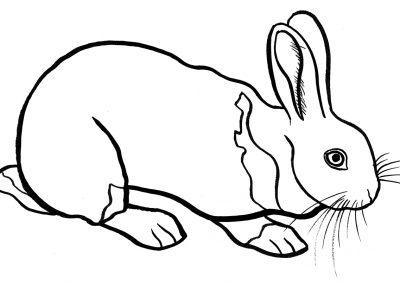 rabbit227