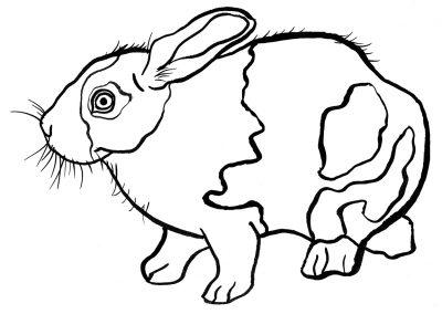 rabbit228